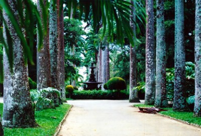 Tour Rio 9 — Tijuca Forest and Corcovado Duration: 8 hours